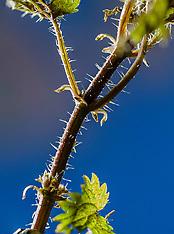 Urticaceae, Brandnetelfamilie
