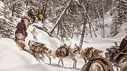 Tsaatan reindeer herders, leave winter camp, Hunkher mountains, northern Mongolia