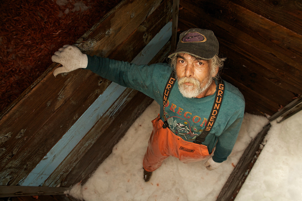 Striker Brad Burton stands in the hold of the Lady Kaye surrounded by shrimp packed in ice that had been sustainably caught over the past three days.