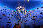 realistic looking under water look of a large fake aquarium with fish on strings
