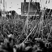 Weeds, Brisbane, Australia (February 2002)
