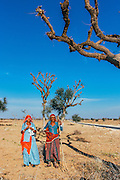 Indian women wearing colorful clothes, collecting shrubs along the road in Rajasthan, India.