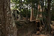 Ta Prohm, Angkor Wat temples, Siem Reap, Cambodia