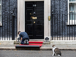 © Licensed to London News Pictures. 15/09/2015. London, UK. Larry the Downing Street Cat looks on as red carpet is laid outside Number 10 Downing St before Prime Minister David Cameron met with Polish President Andrzej Duda.  Photo credit : James Gourley/LNP