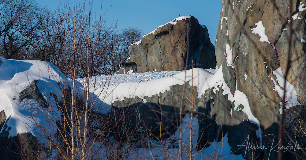 Exhibits and landscapes during winter at the Assiniboine Park Zoo, in Winnipeg, Manitoba