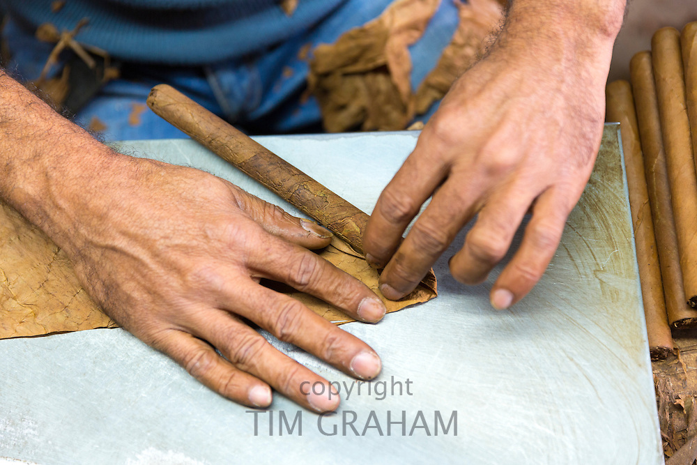 Roller at work making hand-rolled cigars of long leaf tobacco in traditional cigar factory, Decatur Street, New Orleans, USA