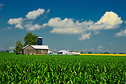 Corn field and old barn<br />