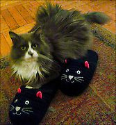 Cat Slippers / Catalog #224