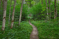 Lakeshore-North Country Trail, Pictured Rocks National Lakeshore Michigan