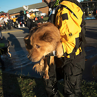 A swift water rescue team member holds a dog that was recused from floodwaters caused by rain from Hurricane Matthew in Lumberton, N.C., Monday, Oct. 10, 2016. (AP Photo/Mike Spencer)