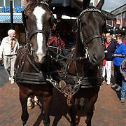 Huizerdag 2001, paarden