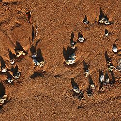 """""""Praia de Manguinhos (Paisagem) fotografado em Manguinhos, Espírito Santo -  Sudeste do Brasil. Bioma Mata Atlântica. Registro feito em 2007.<br /> <br /> <br /> <br /> ENGLISH: Manguinhos beach photographed in Manguinhos, Espírito Santo - Southeast of Brazil. Atlantic Forest Biome. Picture made in 2007."""""""