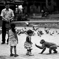 Humans, doves and monkeys in Kathmandu