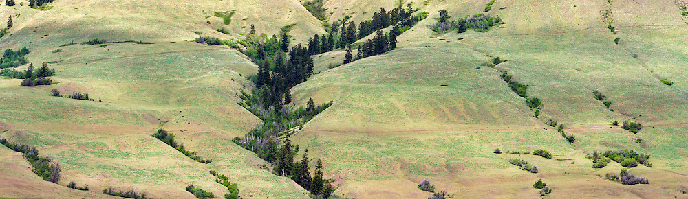 Cow pasture on the side of Vernon Mountain in Coldstream, British Columbia, Canada