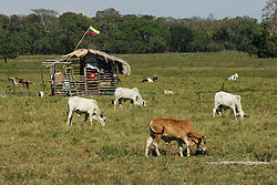 "A small shack waves the Venezuela flag on the El Charcote cattle ranch, where the shacks owner is  squatting with hundreds of other people.  The Venezuela government recently began a three month ""intervention"", during which they will evaluate the productivity of the land on the British owned cattle ranch.  If the government determines the lands to be under-producing, or that the proper titles are not in order, they may redistribute those lands to the poor farmers who have been squatting on the lands."
