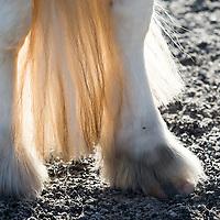 Legs & Hooves