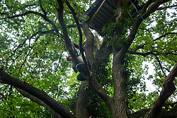 Denham, UK. 13 July, 2020. An environmental activist from HS2 Rebellion climbs up to a tree house at Denham Protection Camp. The camp was created by the activists in order to try to prevent the destruction of woodland for the £106bn HS2 high-speed rail link which will remain a net contributor to CO2 emissions during its projected 120-year lifetime.