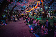 Evening sets in on the o-hanami, cherry blossom viewing, festival in Ueno Park, Tokyo, Japan.