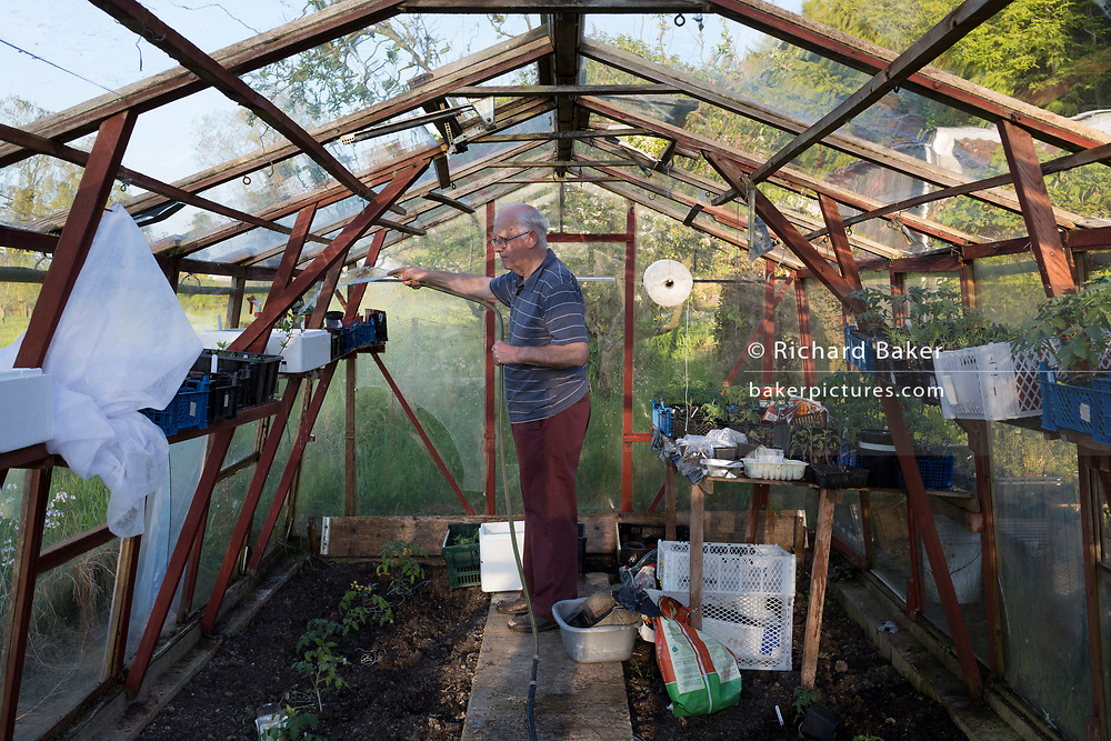 An elderly man waters his plants inside the greenhous, on 5th May 2018, in Wrington, North Somerset, England.