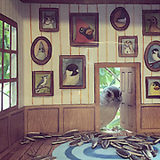 Woman Makes Tiny Homes for Her Wild Bird Friends<br /> <br /> Jada Fitch is an artist and illustrator based in Portland, Maine. She's also a self-professed 'birder' who not only enjoys birdwatching and illustrating them (her bird drawings are wonderful), but also making tiny homes for her winged friends and filling them with delicious treats.<br /> Fitch not only decorates the interiors, she places them outside of her window so she can photograph and video them as they curiously peek in. While the tiny homes are just a fun crafts project, Jada's illustrations are fantastic and you can purchase prints and other items through her online shop, currently working on a version that will easily ship, and should be for sale by the end of the month and can be found at her Facebook page  https://www.facebook.com/jadafitchbirdhomes<br /> ©jada Fitch/Exclusivepix Media