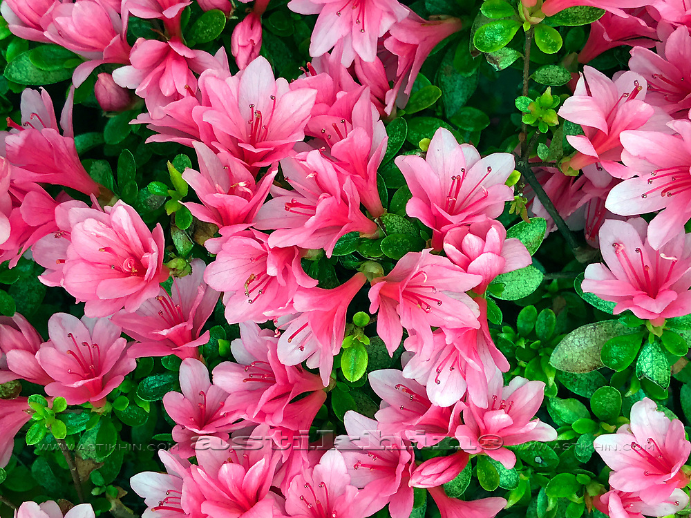 Color of Spring.