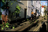 Man decorates street with sycamore the evening before May Day as formal couple walks by in Padstow; Cornwall, England.