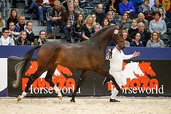 639, Woodlander Woodstock<br /> KWPN Stallionshow - 's Hertogenbosch 2018<br /> © Hippo Foto - Dirk Caremans<br /> 02/02/2018