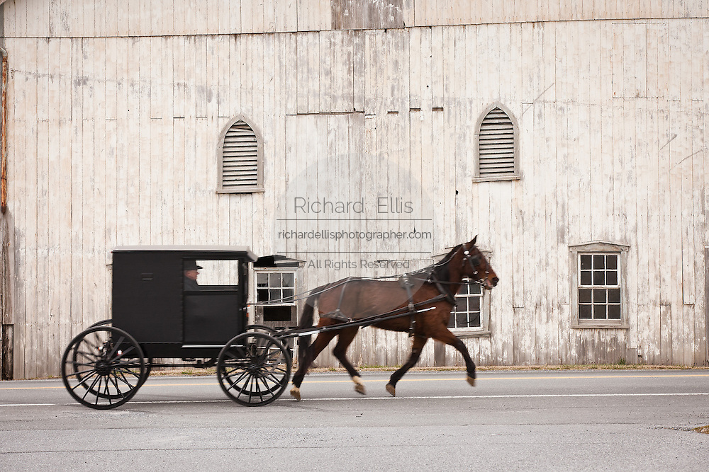 Traditional Amish horse buggy passes an white Amish barn Weaverland, PA