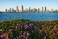 San Diego Skyline, Coronado Island, California