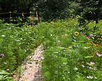 Backyard Wildflower Garden. Image taken with a Leica CL camera and 23 mm f/2 lens
