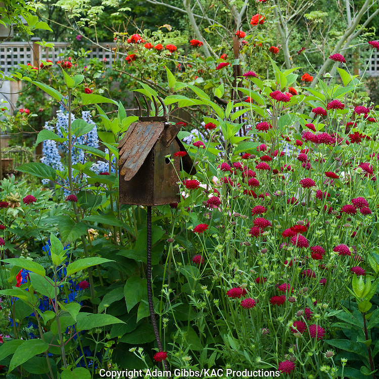 rusty birdhouse surrounded by perennials