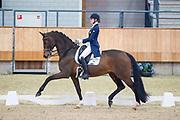 Zoe Kuintjens - Primeval Brittsion<br /> KNHS Indoorkampioenschappen 2018<br /> © DigiShots