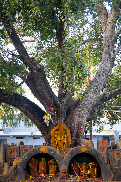 KADIRI, INDIA - 03rd November 2019 - Tree growing in the courtyard of Kadiri temple, Andhra Pradesh, South India.