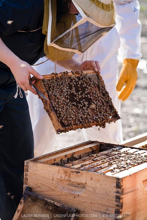 Urban beekeeping by Toronto Beekeepers Cooperative.