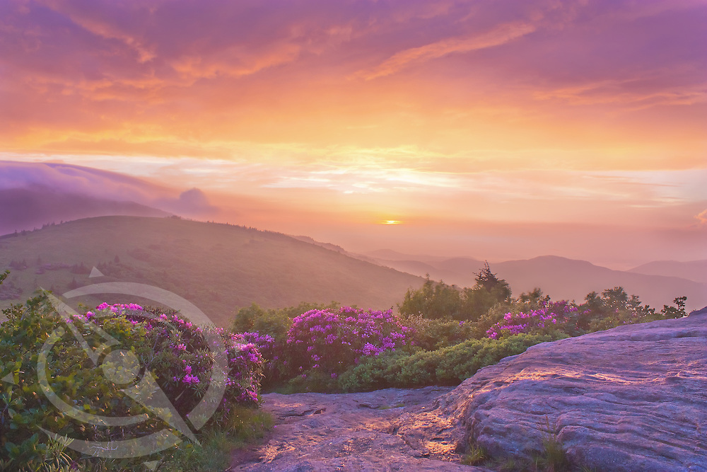 After a summer thunderstorm clears the mountain air, the sun takes one final peek through the clouds to light up the hills and the rhododendron before passing over the horizon. Roan Highlands of North Carolina and Tennessee.