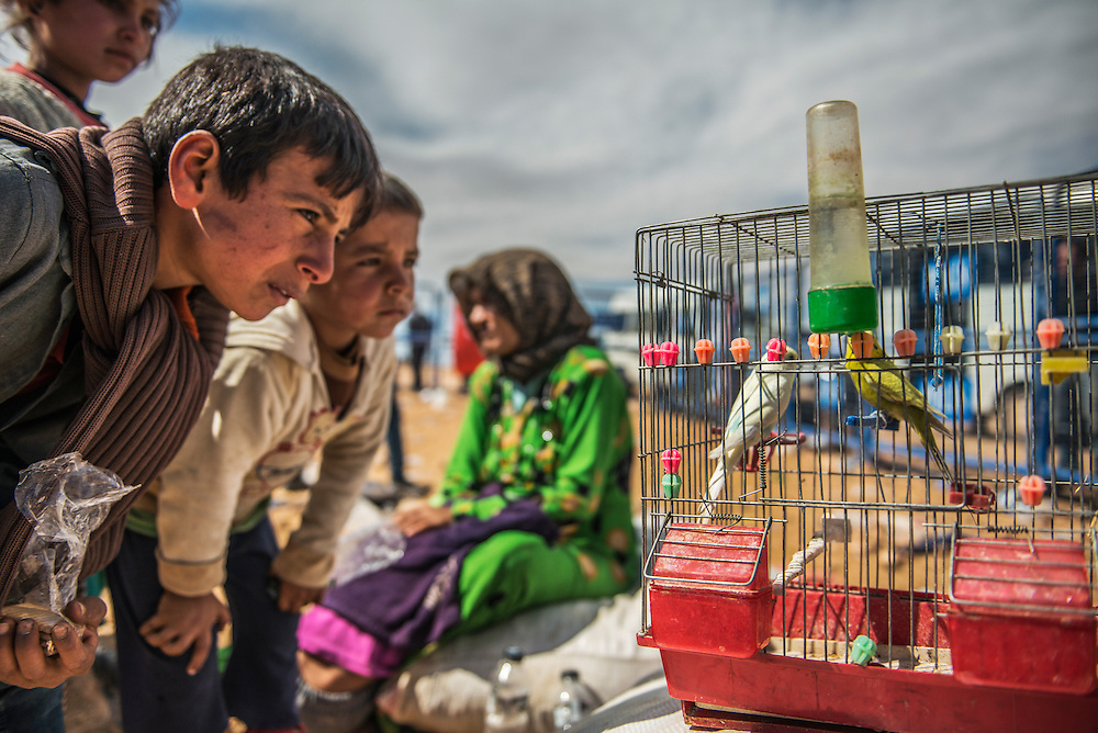 Syrian Children watching their birds, which was brought crossing over the border syria to turkey