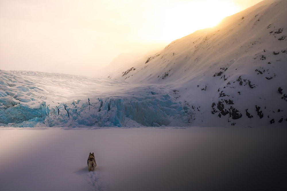 [Currently 2 of 33 sold]<br /> <br /> Today Portage Glacier continues its retreat, but on the day this was photographed, with my Siberian Husky named Loki, maybe it made up a couple inches. It was snowing and the sun managed to break through the clouds at just the right time. It was a serene moment and I'm glad we were there. I will never forget it.