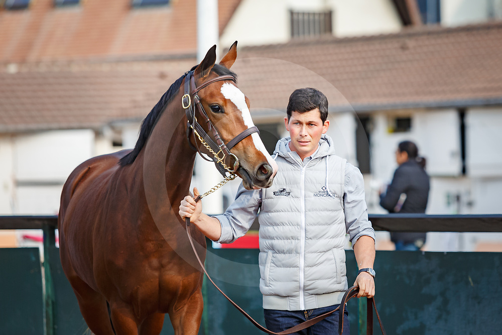lot 59 Arqana October Yearling Sale, Deauville, 17/10/2017, photo: Zuzanna Lupa