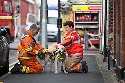 © Licensed to London News Pictures . 09/08/2016 . Manchester , UK . Fire crew with dog adjacent to Curzon Road in Ashton Under Lyne in East Manchester where a house caught fire and there was an explosion early this morning . Ten people are reported injured , one seriously  . Photo credit : Joel Goodman/LNP
