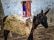 young girl at the door to her house with a donkey. Photographed in Wadi Qelt