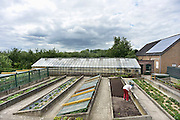 Nederland, Nijmegen, Lent, 25-6-2014Een boomgaard, Warmoes, met eeuwenoude hoogstam fruitbomen. Een warmoes is een boomgaard met ertussenin stroken grond waar groente op wordt verbouwd, geteeld. De opbrengst, producten worden naar de markt in de stad gebracht.Foto: Flip Franssen/Hollandse Hoogte