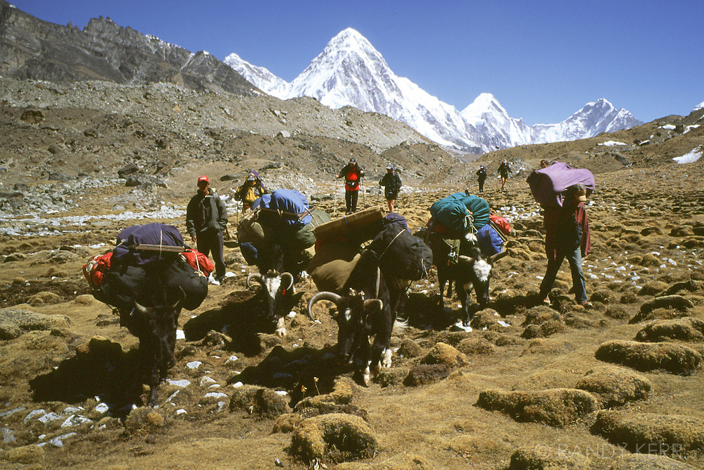 Trekking with yaks in Solo Khumbu