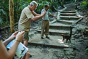 Guide and tourists photograph a White- nosed Coati, Nasua narica, in Tikal National Park, Guatamala.