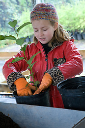 United States, Washington, Issaquah, girl (age 8) planting tree seedlings, Social Venture Partners community service project with Mountains to Sound Greenway Trust.   MR
