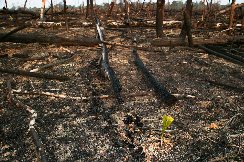 Porto de Moz (Para state) Brazil. Deforestated area on public lands in Porto de Moz region. In the previous year there was  a 40% increase in deforestation of Brazil. Para state is responsible for 1/3rd of the total Amazon deforestation.