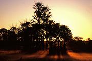 Aquidauana_MS, Brasil...Por-do-sol no Pantanal, Mato Grosso do Sul...The sunset in Pantanal, Mato Grosso do Sul...FOTO: Joao Marcos Rosa / Agencia Nitro