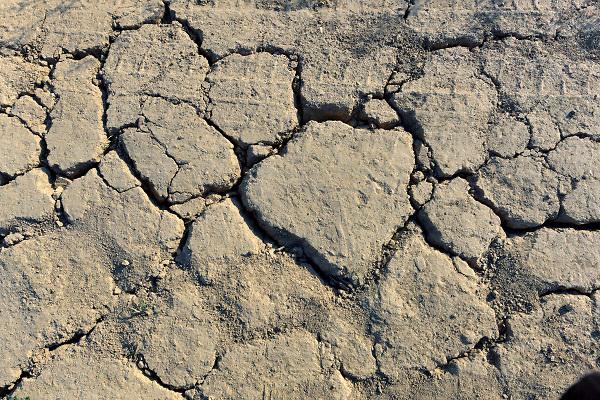 Nederland, Tiel, 13-7-2018Door het uitblijven van regen is de grond gebarsten.Foto: Flip Franssen