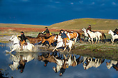 Cowboys and Western Horses
