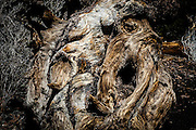 Close up of a weathered, textured tree stump