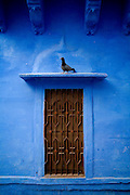 Jodhpur. A pigeon sits above a grilled window against blue wall.